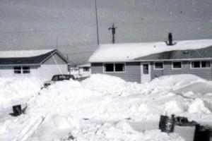 20 birch 1960-61