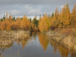 fall trees and pond n manitoba