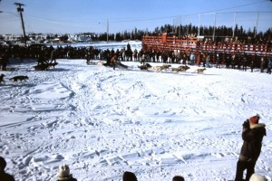 winter carnival dog sled racing 73