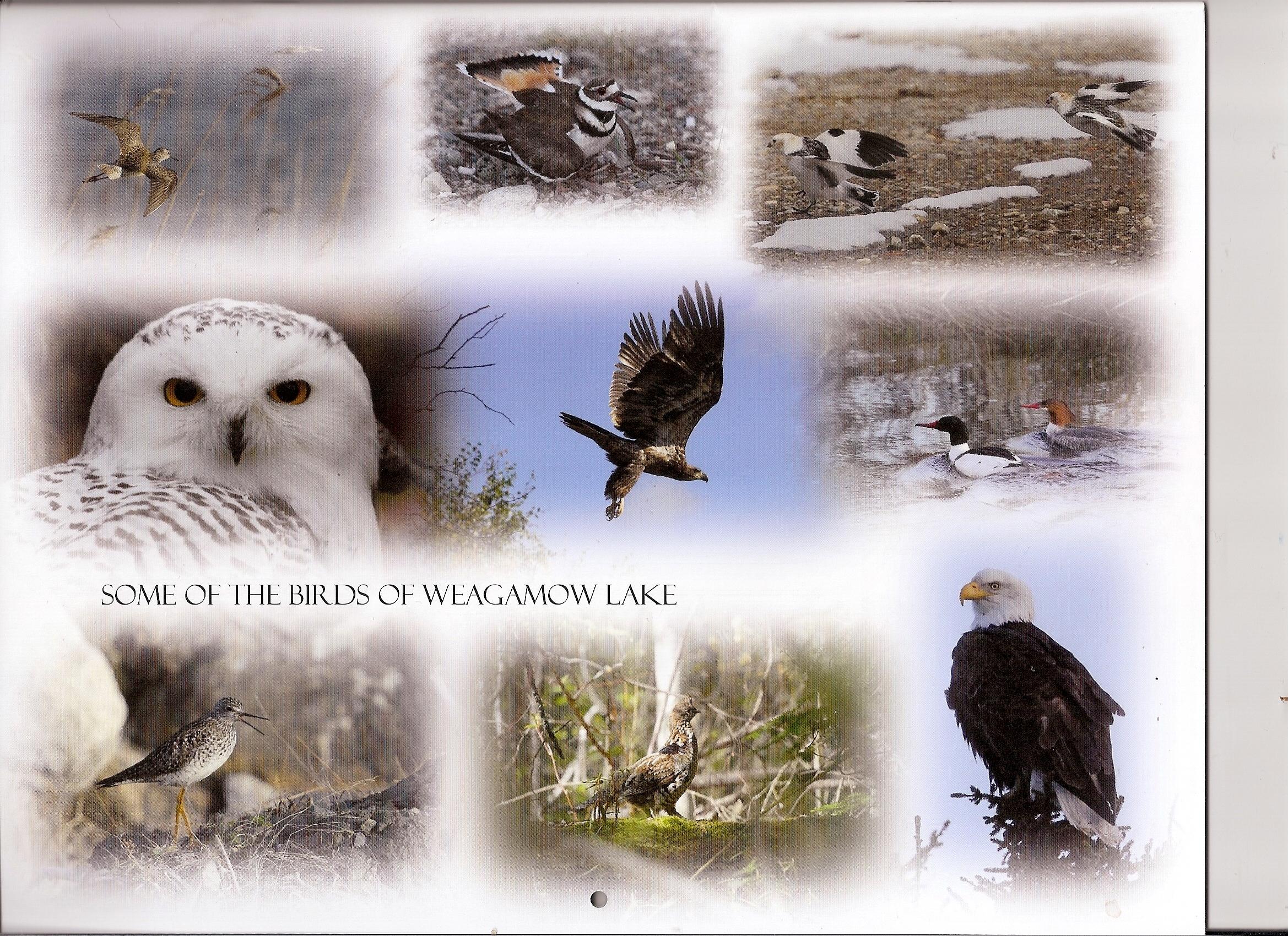 birds of round lake